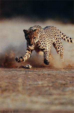 88 عکس از حیوانات رکورد دار ! جالب و باور نکردنی!