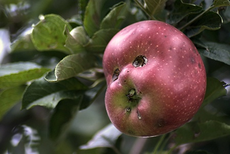 9564125879 عکس های میوه و سبزیجات جالب و خنده دار
