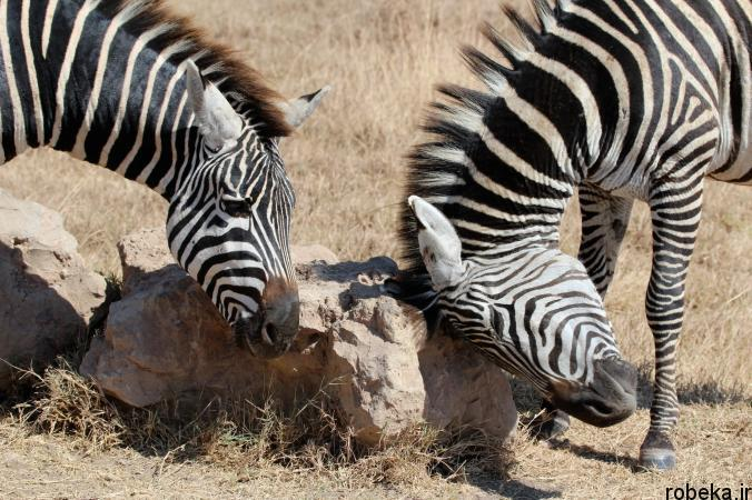 Itchy Animals photos 10 25 عکس خنده دار از حیواناتی که تنشون میخاره