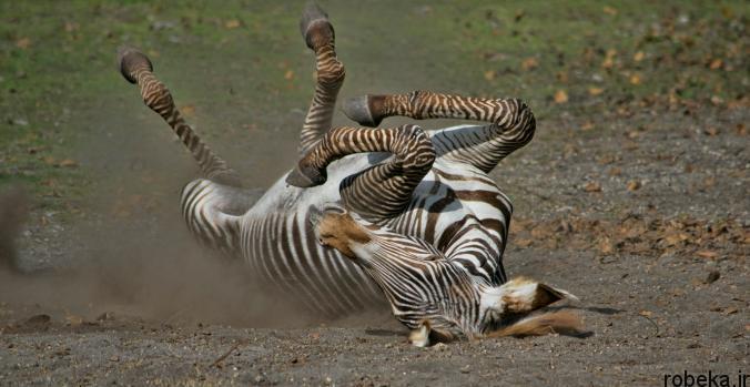 Itchy Animals photos 2 25 عکس خنده دار از حیواناتی که تنشون میخاره