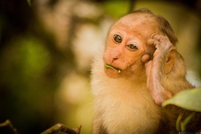 Itchy Animals photos 21 25 عکس خنده دار از حیواناتی که تنشون میخاره