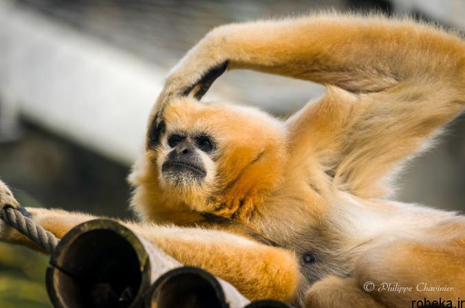 Itchy Animals photos 4 25 عکس خنده دار از حیواناتی که تنشون میخاره