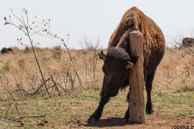 Itchy Animals photos 7 25 عکس خنده دار از حیواناتی که تنشون میخاره