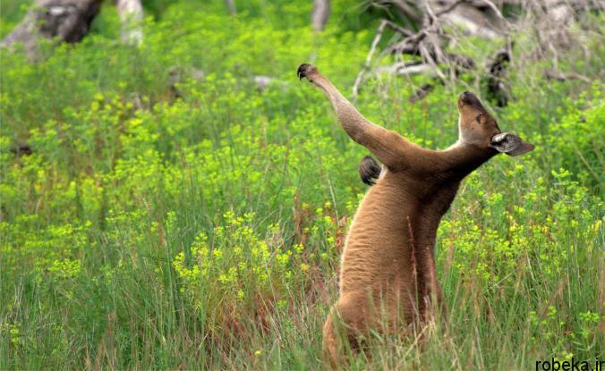 Itchy Animals photos 8 25 عکس خنده دار از حیواناتی که تنشون میخاره