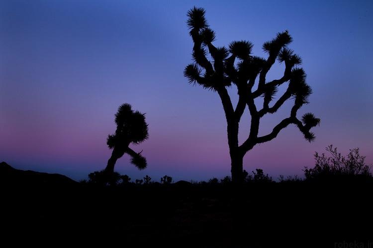 National Park 15 20 عکس دیدنی از پارک های ملی با زمین های رنگین کمانی در ایالات متحده آمریکا