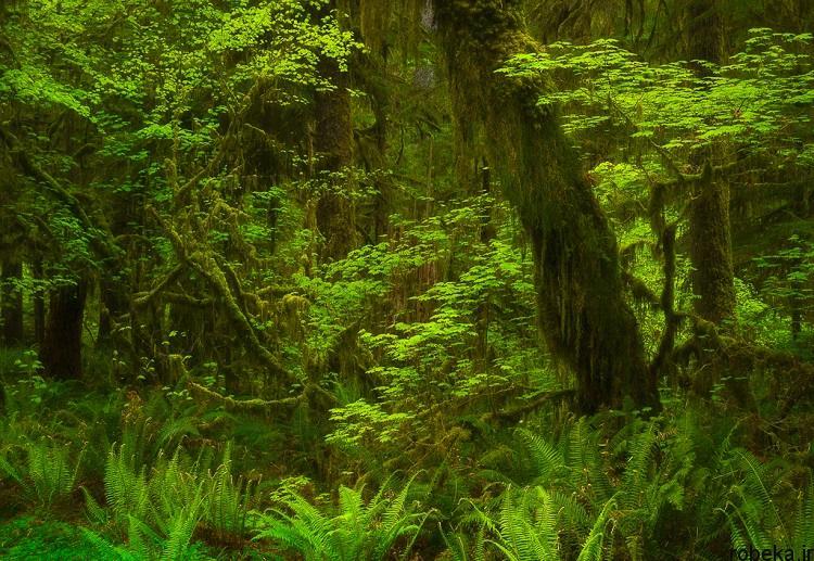 National Park 5 20 عکس دیدنی از پارک های ملی با زمین های رنگین کمانی در ایالات متحده آمریکا