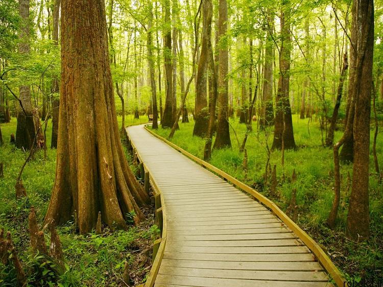 National Park 6 20 عکس دیدنی از پارک های ملی با زمین های رنگین کمانی در ایالات متحده آمریکا
