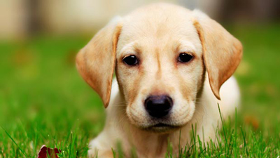 astrology dogs1 1 طالع بینی متولدین 1397 (سال سگ)