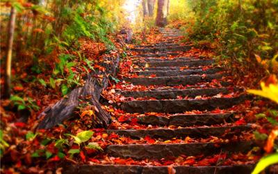 autumn1 اس ام اس فصل پاییز