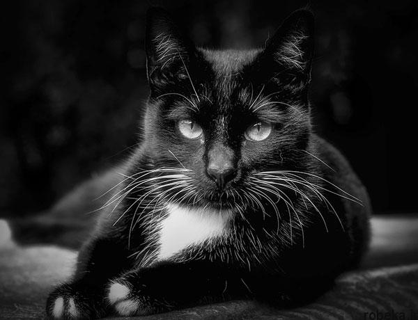 black white artistic portraits photos 4 عکس پرتره سیاه و سفید هنری از چهره های دخترانه و مردانه