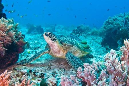 بوهول, حیوانات جزیره بوهول, امکانات تفریحی جزیره بوهول