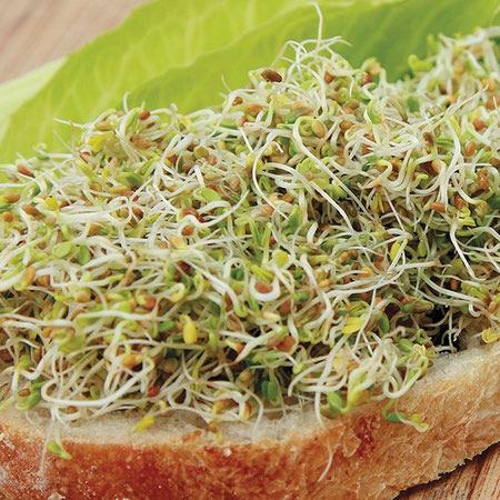 clover sprouts 3 جوانه شبدر چیست؟ خواص بی نظیر جوانه شبدر