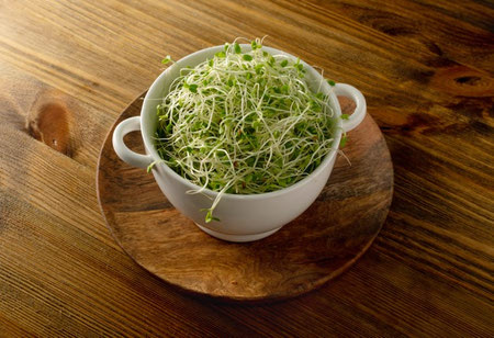 clover sprouts 4 جوانه شبدر چیست؟ خواص بی نظیر جوانه شبدر