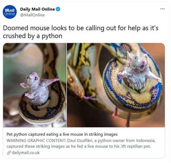 %name عکس دیلی میل از درخواست کمک یک موش!