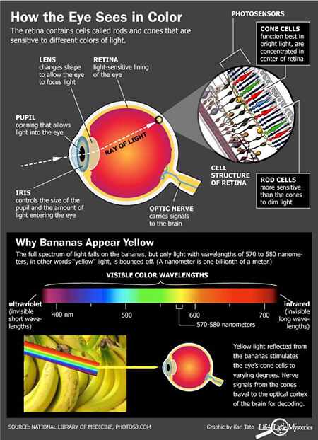 %name چرا انسان جهان را رنگي ميبيند؟