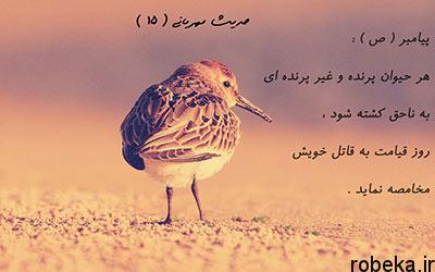 hadith 08 احادیثی از پيامبر اکرم (ص) درباره حقوق حیوانات