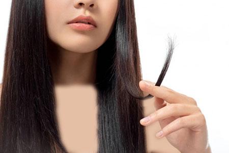 کرم مو آبرسان, کرم مو, کاربرد کرم مو