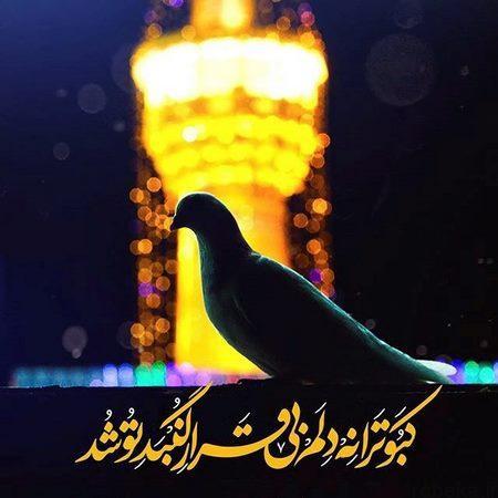 imamreza photokade 4 Copy عکس پروفایل امام رضا | عکس نوشته امام رضا دارم میام