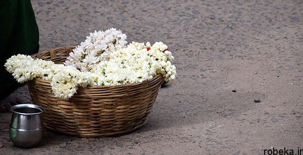 jasmine basket عکس های زیبا از گل های یاس برای پروفایل