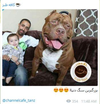 joke telegram10 mr09 عکس های طنز و خنده دار تلگرام