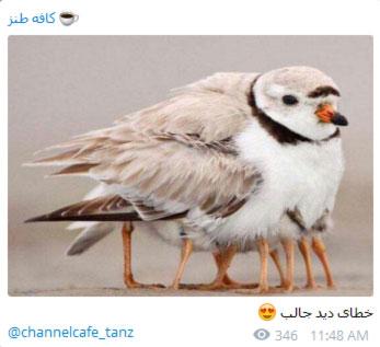 joke telegram11 mr09 عکس های طنز و خنده دار تلگرام