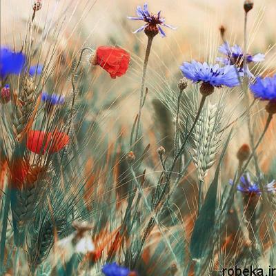 life existence122 2 متن و جملات زیبا با موضوع زندگی زیباست