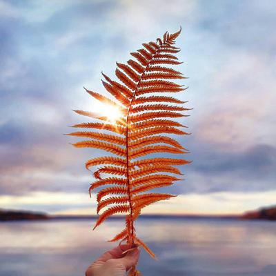 life philosophical129 1 متن و جملات زیبا با موضوع زندگی زیباست (9)