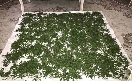 methods1 drying mint2 روش هایی برای خشک کردن نعنا