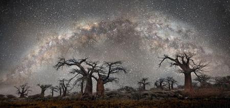 oldest trees world1 تصاوير كمياب ترين و كهنسال ترين درختان دنيا