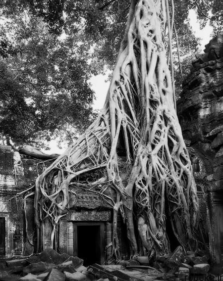 oldest trees world10 تصاویر کمیاب ترین و کهنسال ترین درختان دنیا