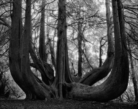 oldest trees world11 تصاویر کمیاب ترین و کهنسال ترین درختان دنیا