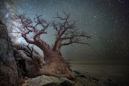 oldest trees world4 تصاویر کمیاب ترین و کهنسال ترین درختان دنیا