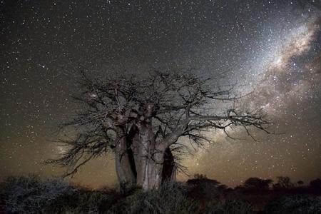 oldest trees world5 تصاویر کمیاب ترین و کهنسال ترین درختان دنیا