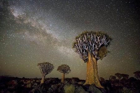 oldest trees world6 تصاویر کمیاب ترین و کهنسال ترین درختان دنیا