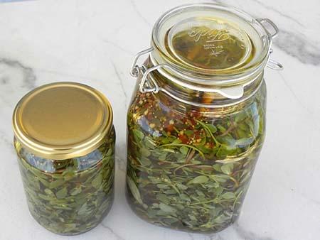 pickled purslane recipes 05 طرز تهیه انواع ترشی خرفه