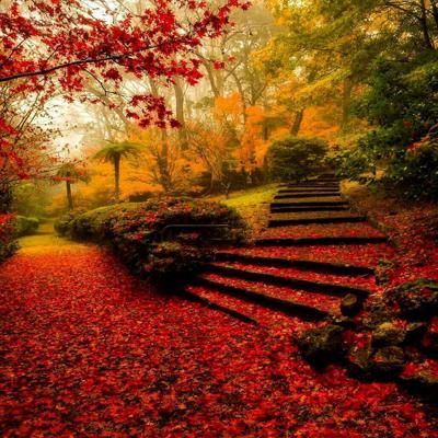 poems autumn1 2 اشعار زیبا و خواندنی درباره پاییز