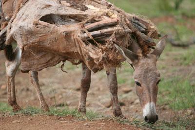 proverbs donkey2 1 ضرب المثل ﺑﺎﺭ ﺍﻻﻍ ﺭﺍ ﮐﻪ ﺑﺮﺩﺍﺭﻧﺪ،ﭘﺎﻻﻧﺶ ﺭﺍ ﻫﻢ ﺑﻪﻣﻘﺼﺪ ﻧﻤﯽﺭﺳﺎﻧﺪ