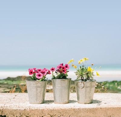 proverbs flower1 1 داستان ﺿﺮﺏﺍﻟﻤﺜﻞ گل پشت و رو ندارد
