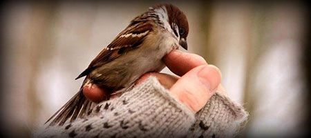 sparrow story حکایت نصیحت های جالب گنجشک به مرد دمشی
