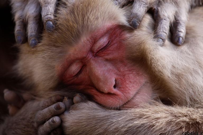 wildlife animal photos 1 29 عکس زیبا و دیدنی نشنال جئوگرافیک از حیات وحش حیوانات