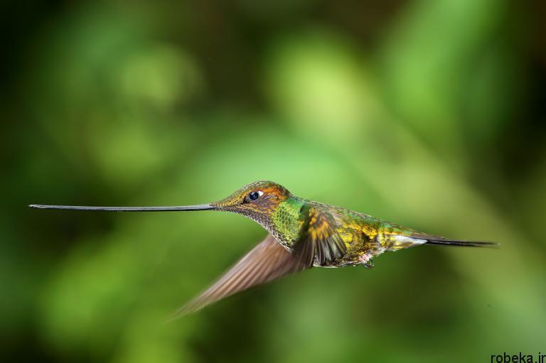 wildlife animal photos 10 29 عکس زیبا و دیدنی نشنال جئوگرافیک از حیات وحش حیوانات