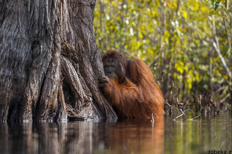 wildlife animal photos 11 29 عکس زیبا و دیدنی نشنال جئوگرافیک از حیات وحش حیوانات
