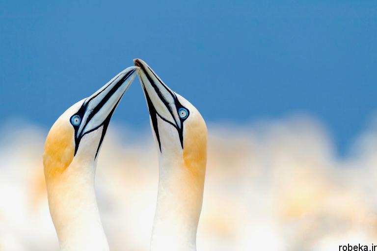 wildlife animal photos 12 29 عکس زیبا و دیدنی نشنال جئوگرافیک از حیات وحش حیوانات