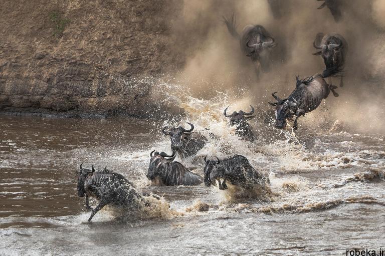wildlife animal photos 14 29 عکس زیبا و دیدنی نشنال جئوگرافیک از حیات وحش حیوانات