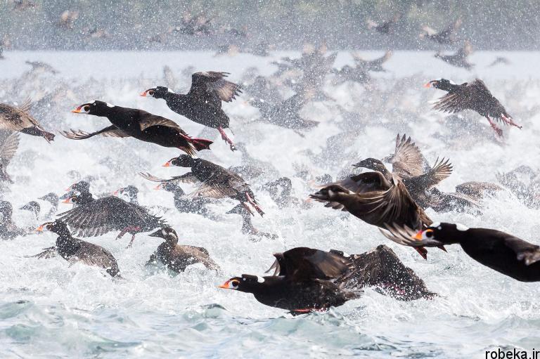 wildlife animal photos 15 29 عکس زیبا و دیدنی نشنال جئوگرافیک از حیات وحش حیوانات