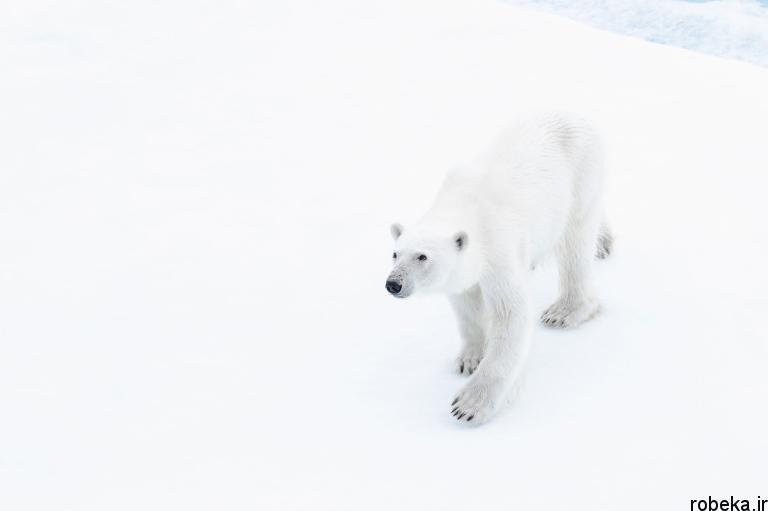 wildlife animal photos 16 29 عکس زیبا و دیدنی نشنال جئوگرافیک از حیات وحش حیوانات