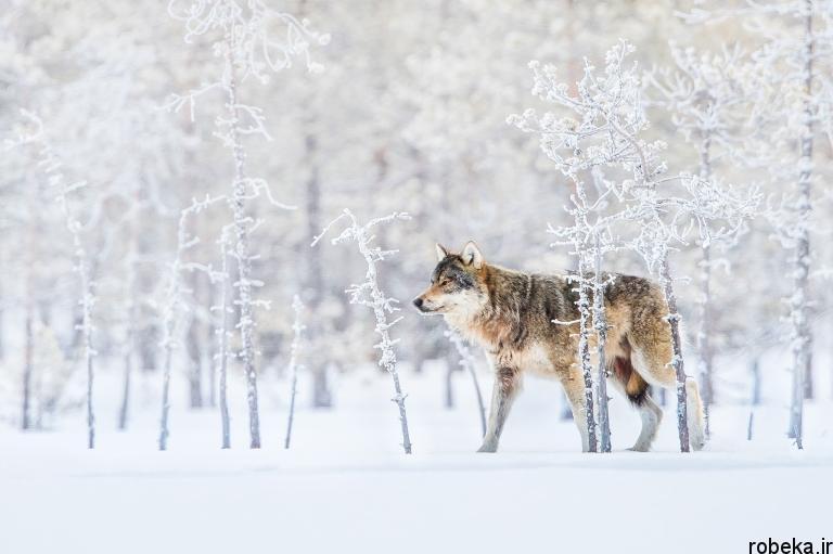 wildlife animal photos 17 29 عکس زیبا و دیدنی نشنال جئوگرافیک از حیات وحش حیوانات