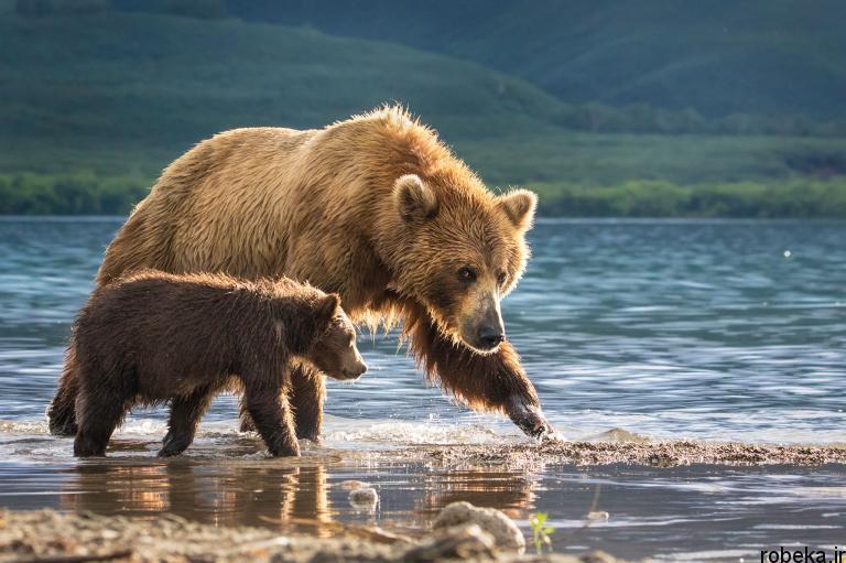 wildlife animal photos 20 29 عکس زیبا و دیدنی نشنال جئوگرافیک از حیات وحش حیوانات