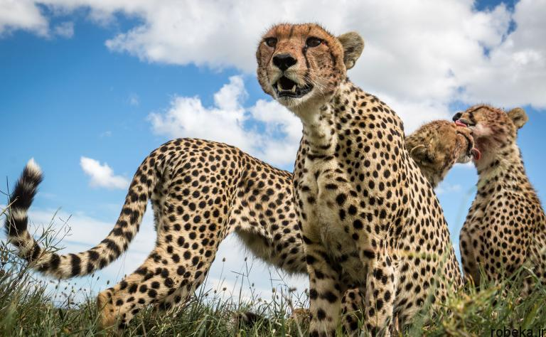 wildlife animal photos 21 29 عکس زیبا و دیدنی نشنال جئوگرافیک از حیات وحش حیوانات