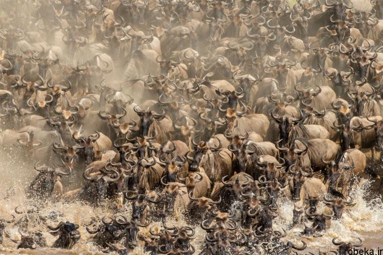 wildlife animal photos 22 29 عکس زیبا و دیدنی نشنال جئوگرافیک از حیات وحش حیوانات